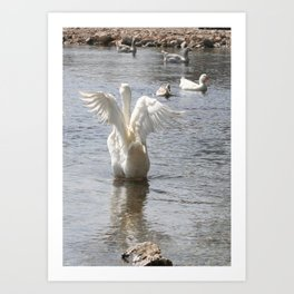 White Duck Flapping Wings on Water Art Print