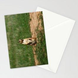 Black-Tailed Prairie Dog Stationery Cards