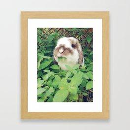 Bunny eating leaves Framed Art Print
