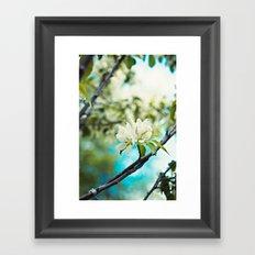 tropical flower. Framed Art Print