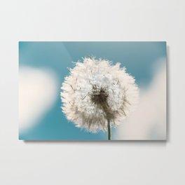 Flower - Taraxacum Officinale Metal Print