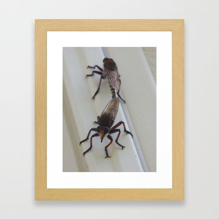 robber flies in love IV Framed Art Print