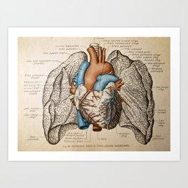 Vintage anatomy illustration Art Print