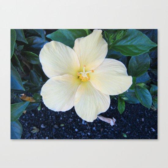 Lemony Cream Grace Canvas Print