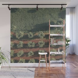 Aerial photo, nature textures, drone photography, olive trees, Apulia, Italian countryside Wall Mural