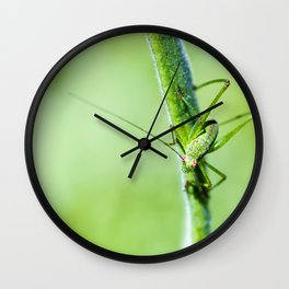 Common green cricket insect on branch Wall Clock