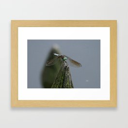 Launch Pad Framed Art Print