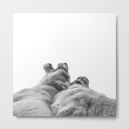 Lion Photography | Animal Art | Love | Black and White Metal Print