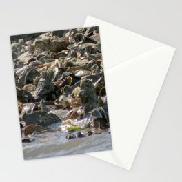 Oyster Bed Stationery Cards