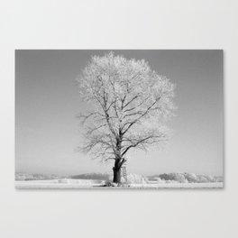 Iced oak Canvas Print