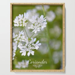 Coriander in flowers VI Serving Tray
