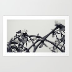 mistletoe... Art Print