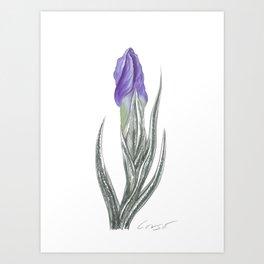 Iris 04 Botanical Flower* Purple Bearded Iris Bud Art Print