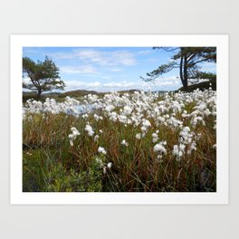 Swedish swamp flowers Art Print