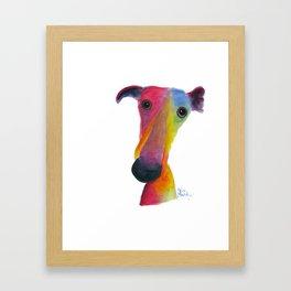 Nosey Dog Whippet Greyhound ' PUMPKIN ' by Shirley MacArthur Framed Art Print