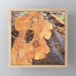 TEXTURES - Manzanita in Drought Conditions #2 Framed Mini Art Print