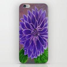 Purple Dahlia  iPhone & iPod Skin
