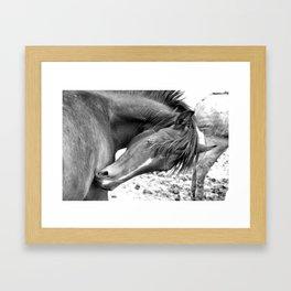 Wild 04 Framed Art Print