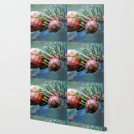 Baby Pine Cones Wallpaper