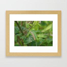 Mullein Caterpillar Framed Art Print