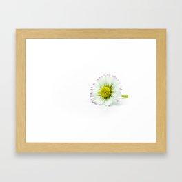 Margherita Framed Art Print