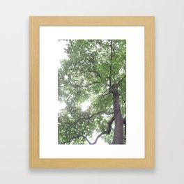 Summer Rays Framed Art Print