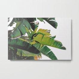 Banana Leaves IV {White} Metal Print