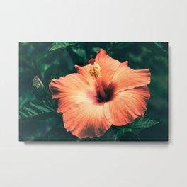 Hibiscus in the bloom Metal Print
