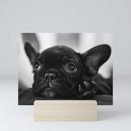 Looking Cute Mini Art Print