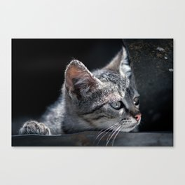 soft kitty Canvas Print