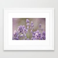 lavender Framed Art Prints featuring lavender by Iris Lehnhardt