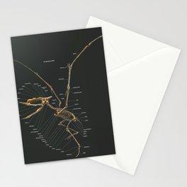 Dsungaripterus Weii Skeleton Study Stationery Cards