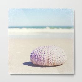 Sea Urchin Beach Photography, Seashell Blue Purple Art, Shell Coastal Ocean Photo Metal Print