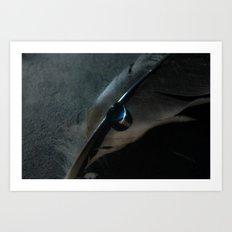 crow feather Art Print