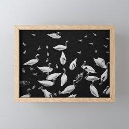 Swan Song Framed Mini Art Print