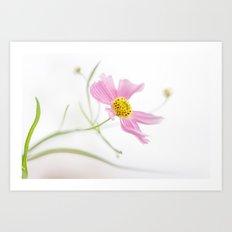 Coreopsis Rosea Art Print