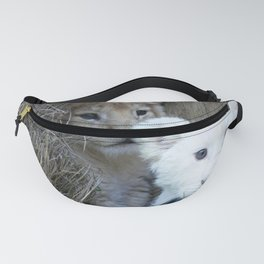 White and Gold Baby Lion Cubs! Fanny Pack