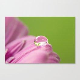 Water Droplet Gerbera Daisy Canvas Print
