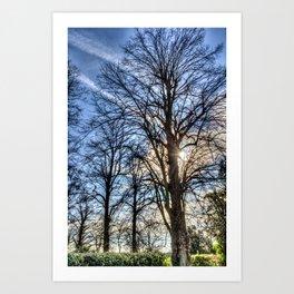 Churchyard Tree  Art Print