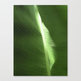 Meditation XX Canvas Print