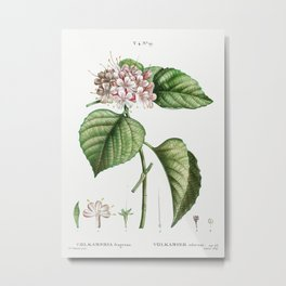 Chinese Glory Bower (Volkameria fragrans) from Traité des Arbres et Arbustes que l'on cultive en Fra Metal Print