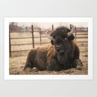 buffalo Art Prints featuring Buffalo  by Rob Hawkins Photography