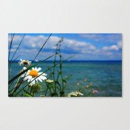 Daisy at the Lake Canvas Print
