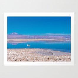 Flamingos in the Desert, San Pedro de Atacama, Chile Art Print