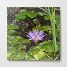 Exquisite water lily Metal Print