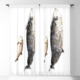 Cuvier´s beaked whale Blackout Curtain