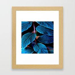Peacock Blue Leaves Nature Background #decor #society6 #buyart Framed Art Print