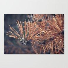Pine Needle Canvas Print