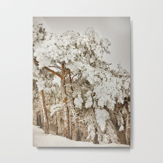 """Snow trees"". After the snowstorm Metal Print"