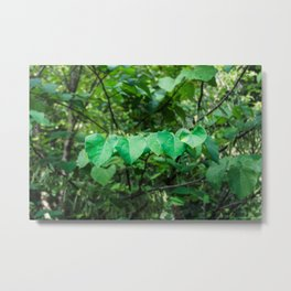Heart Leaves Metal Print